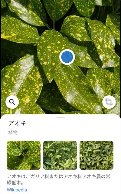 の 名前 植物 プランツタグの素材とデザイン…おすすめの素材は? [家庭菜園]
